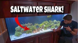 my-new-pet-exotic-shark-for-my-aquarium
