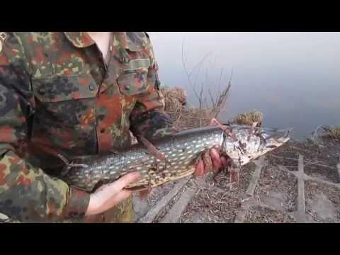 Ловля щуки весной в белоруссии