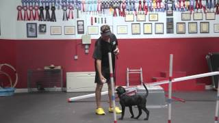 Training Your New Puppy Or Dog - How To Train Puppies - Puppy Training Day 1 | Sitmeanssit.com
