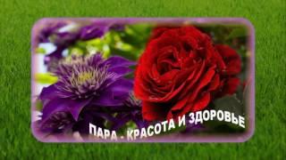 КАК ПОДОБРАТЬ КЛЕМАТИСУ ПАРУ? Советы от Нины Петруши и канала Клематис TV