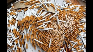 Fake cigarettes contain insects, poo and dangerous toxins