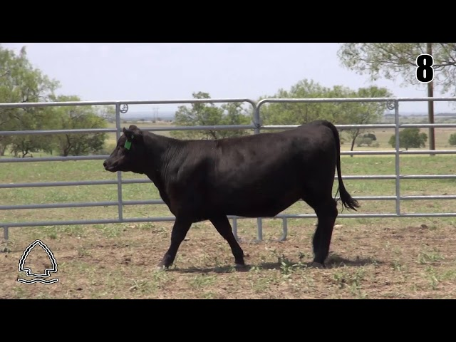 Pearcy Angus Ranch Lot 8