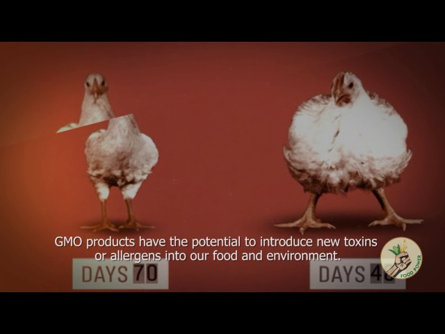 Shocking Facts About GMOs