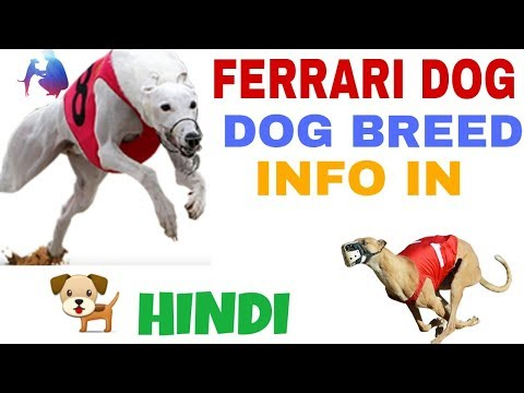 greyhound dog facts in hindi