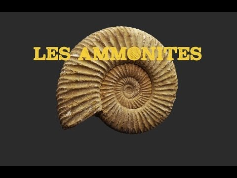 Les Ammonites