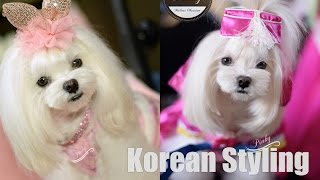 Grooming:  Pinky's Korean Style Transformation *(^_^)* Maltese Korean Style Face Shaping
