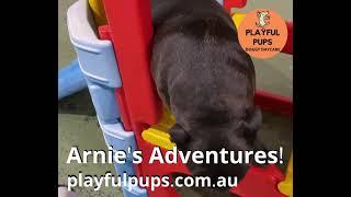 Arnie's Playtime