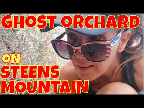 The Curious Case Of The Weston Brothers' Ghost Orchard: Exploring Oregon's Alvord Desert Part 2 Of 4