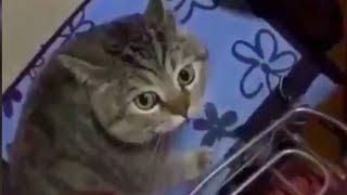 しゃべる猫集