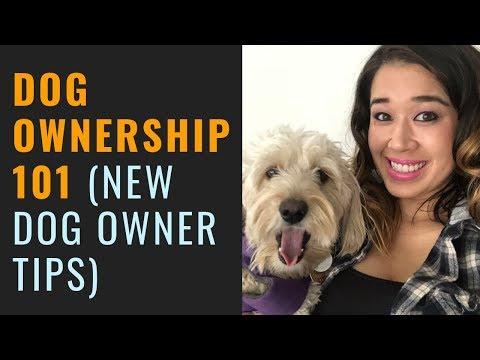 Dog Ownership 101 (New Dog Owner Tips)