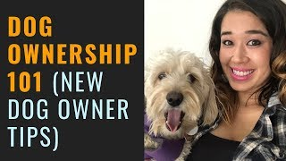 Dog Ownership 101 (New Dog Owner Tips)
