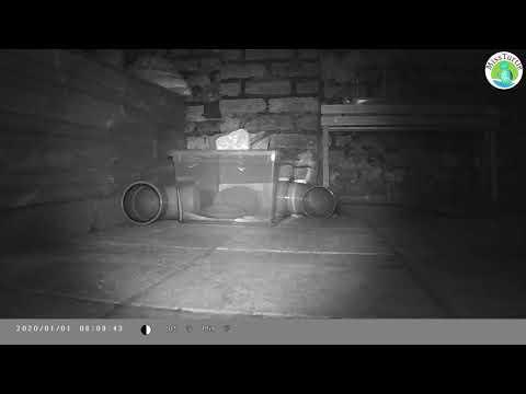 egel/hedgehog drinken eten slapen en zoeken