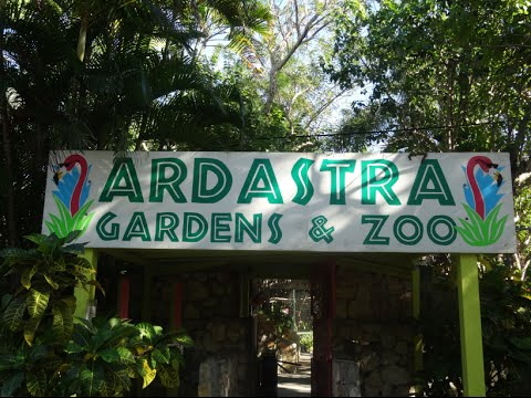 Ardastra Gardens & Zoo FULL Tour & Review With The Legend