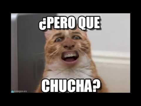 50 Imagenes y memes de gatos divertirdos gracisoso y tierrnos