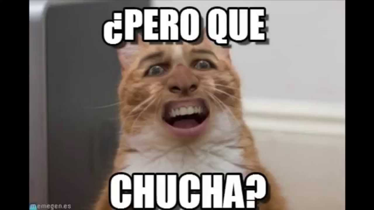 50 Imagenes Y Memes De Gatos Divertirdos Gracisoso Y