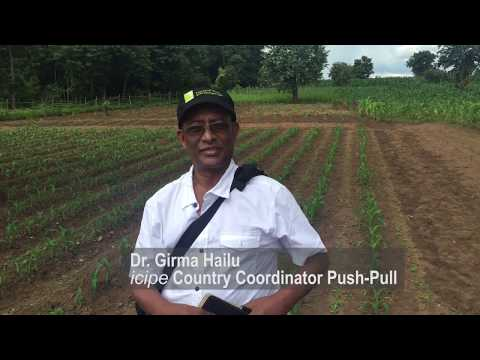 Push-Pull in Malawi