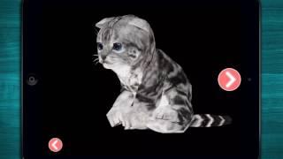 🐱 Real Cute Kitten Cat Simulation - NEW Real Cat Adventure - iOS App