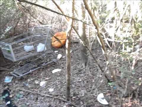 HOUSTON TEXAS Homeless Camps In The Woods
