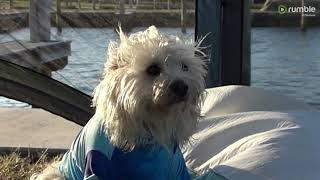 The Lovable Cairn Terrier Mix/ A Salty Dog of the Florida Keys