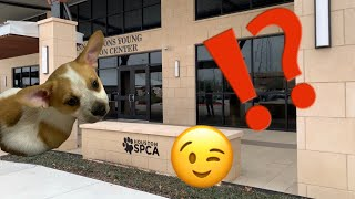 Visited Houston SPCA A Second Time To Look For Cassie's Brother!! (Did We Adopt Again?!?)