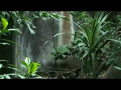 Kaloni v Indonéské džungli