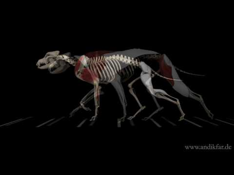 Hunde in Bewegung (Dogs in Motion) - YouTube