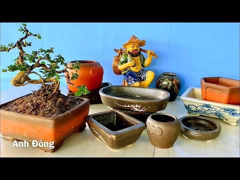 Cách chọn chậu và làm tay cành phù hợp cho cây bonsai