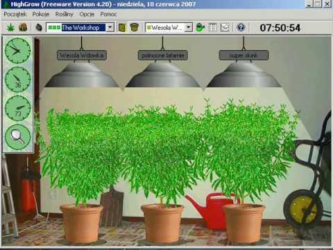 highgrow 4.20