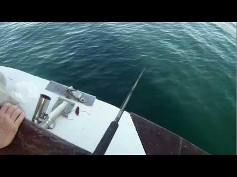 Mirage Sportfishing - 2day  08.16.2011 To 08.17.2011 California Halibut White Seabass