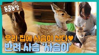 아주머니의 사랑 독차지♡ 생후 2개월 아기 사슴 '사슴이' I TV동물농장 (Animal Farm)   SB…