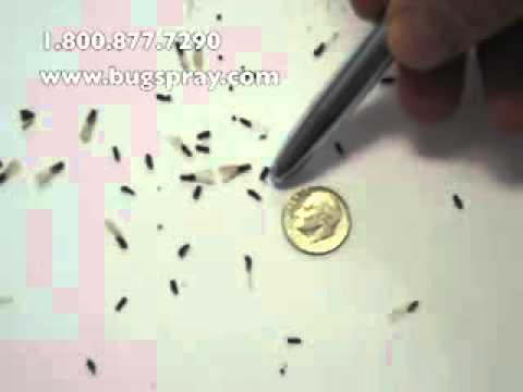 Get Rid Of Termites Termite Swarmers Youtube