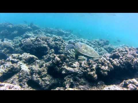 Kauai turtles at Ke'e Beach snorkeling with GoPro Hero 2 HD
