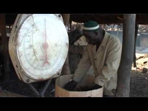 Des Aires marines pour protéger la pêche ? Réflexions en Afrique de l'Ouest