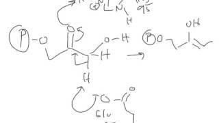 CHEM 407 - Glycolysis - 5 - Triose Phosphate Isomerase