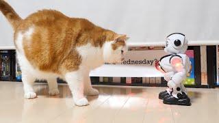 ゲーセンでゲットしたロボット。ネコと仲良し。