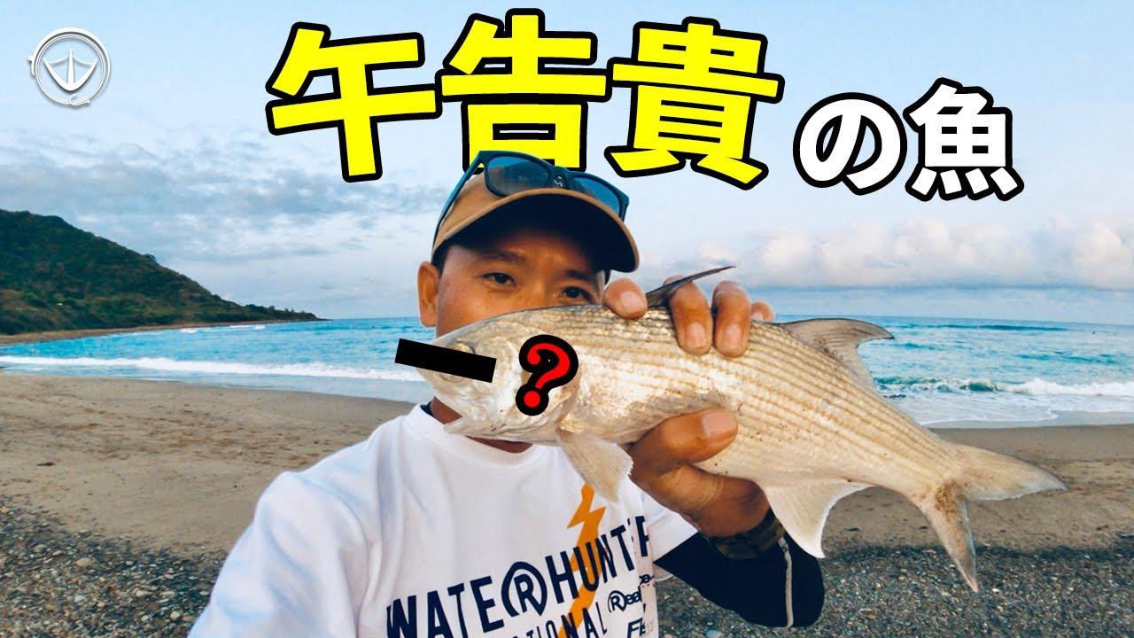 意外釣到最貴的魚!不愧是排行榜第一名!露營吃這個簡直太超過啦~ #鵝大人 #路亞 #露營
