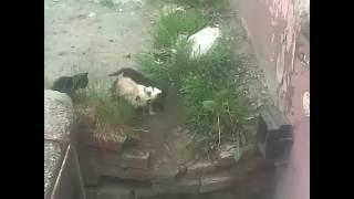 Бездомные-Безхозные Котята В Городе Тюмень(07.06.2016)