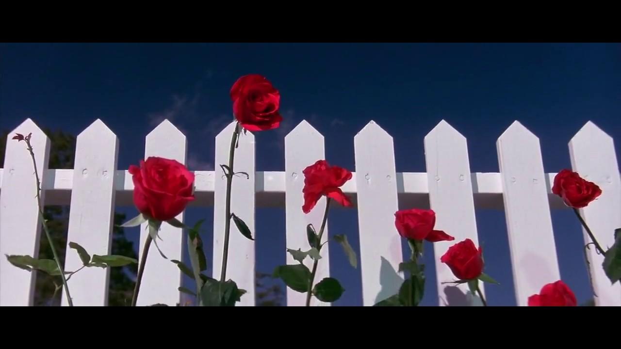 Blue Velvet (1986) Opening Scene Clip #1 HD - YouTube