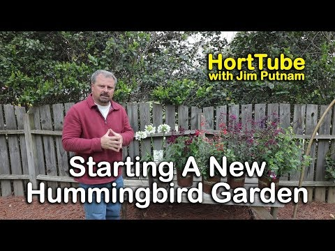 Planting Some New Salvia Varieties For The Hummingbirds