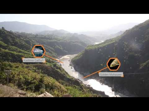 Taking a Landscape Approach in the Jhelum-Poonch River Basin
