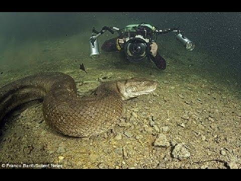 งูยักใหญ่ ส๊าสสสสส ตกใจหมด