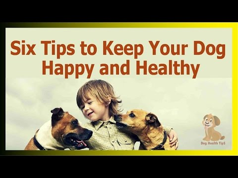 Six Tips To Keep Your Dog Happy And Healthy (dog Health Tips )