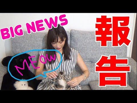 【BIG NEWS】 I'm Keeping A Cat!!! [CC Available]  Yuka Kinoshita