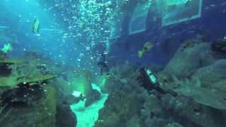 Open Ocean Dive at the S.E.A. Aquarium,  RWS