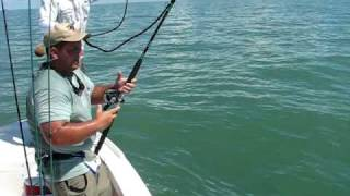 Nick Fighting Monster Bull Shark