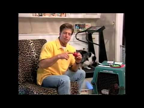 Dikeman Dog Training