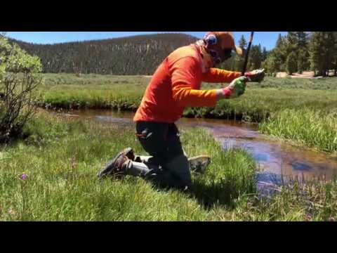Catching Golden Trout On The Horseshoe Meadows