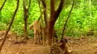 تفتكر مين الى هيكسب مضحك جداااااااااااا funny animals.