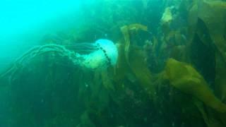 Большая медуза.