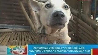 BP: Rabies outbreak, idineklara sa ilang lungsod at bayan sa Negros Occidental